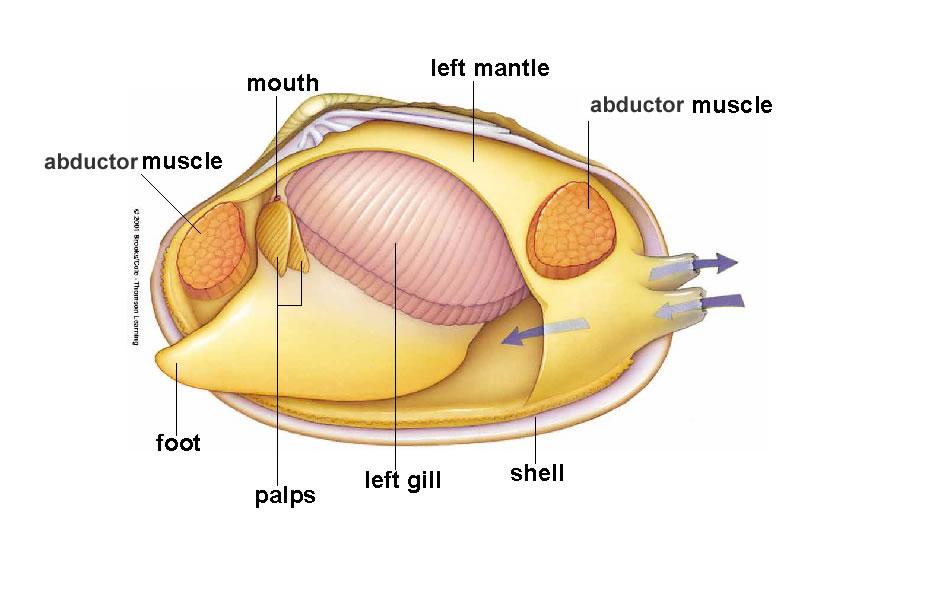 Man And Mollusc Mollusc Mollusk Mollusks